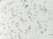 Кухонная столешница ALPHALUX, морозная искра, матовая, R6, влагостойкая, 4200*39*600 мм